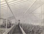Greenhouse interior close-up, Immanuel Deaconess Institute
